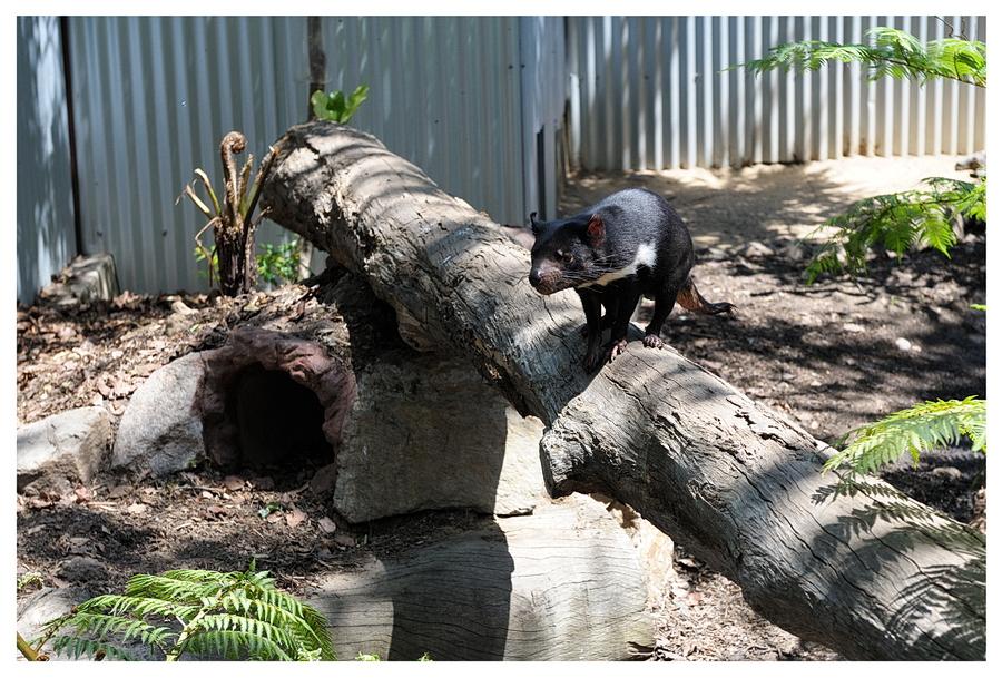 Australie2013-0061