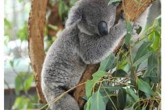 Australie2013-0016