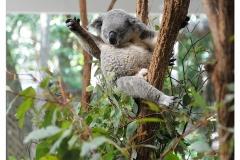 Australie2013-0018