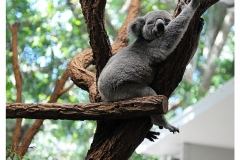 Australie2013-0021