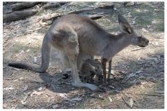 Australie2013-0095